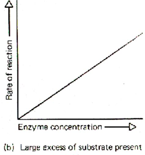 protein vs enzyme review of proteins enzymes