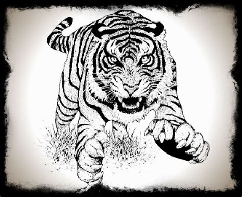 1986 chinese zodiac zodiac born 1986 tigers are born leaders they are respected for their courage as