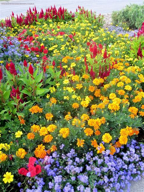 new year marigold flower celosia marigolds petunias ageratum flower bed ideas