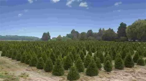 christmas tree farms tree farming information farms com