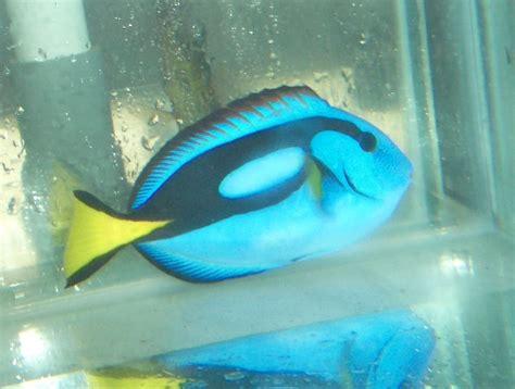 Pakan Ikan Udang Rebon letter six dunia binatang