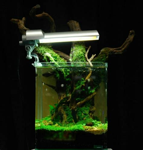 membuat aquascape mini cara membuat aquascape mini murah and lolesinmo com