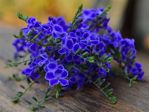 sette fiori di senape 7 fiori significato stratfordseattle