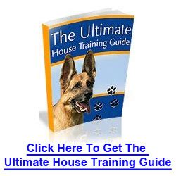 best way to potty a yorkie puppy how to potty your puppy archives how to your yourself