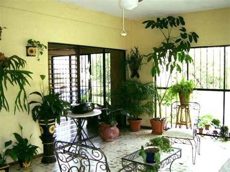 piante da arredamento piante da appartamento poca luce piante appartamento