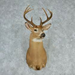 Taxidermy head mount m1 12748 for sale the taxidermy store jpg