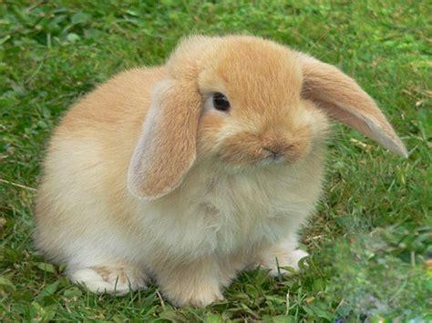 coniglio nano in giardino un giardino a misura di coniglio si pu 242 pollicegreen