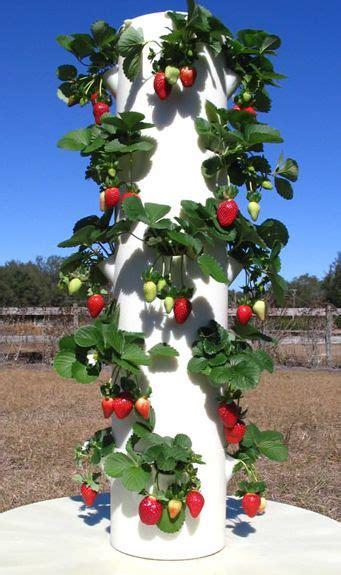 residential la urban farms plants growing tomato