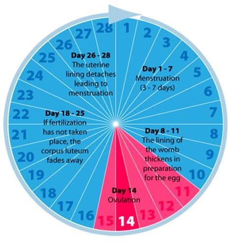 Menstrual Cycle Calendar S Period Sihatselalu
