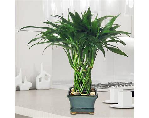 plantas altas de interior plantas para decoracion de interiores 61 curso de