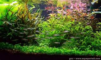 what is aquascaping l aquascaping d 233 finition et explications