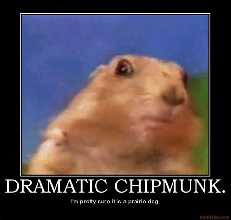 Dramatic Squirrel Meme - funny picture clip funny dog demotivational posters