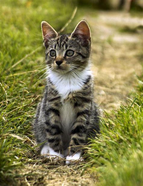 Katzen Im Garten 2523 by 2523 Besten Chaton Bilder Auf K 228 Tzchen
