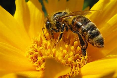 eats bee from bees to honey to mead earth eats indiana media