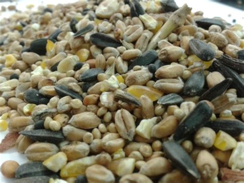 wild bird seed bulk 20kg wbmixs g 163 19 99 pet perfection