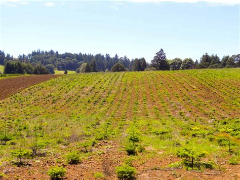 best oregon christmas tree farm 28 best tree farms in oregon tree farm property for sale in oregon
