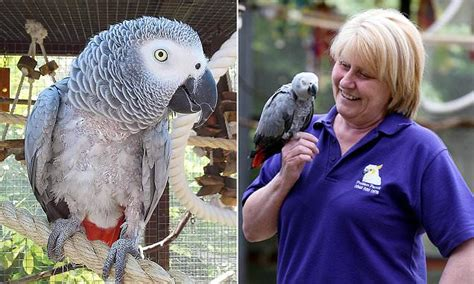 best time of day to give prozac prozac helps parrot to overcome severe anxiety daily mail