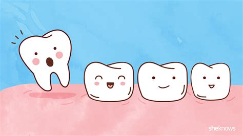 A Tooth For A Tooth a timeline for your child s tooth loss