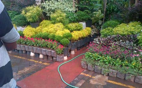 Jurus Sukses Bisnis Tanaman Hias bisnis tanaman hias 2013 kebun net kumpulan budidaya tanaman