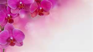 orchid hd wallpaper picture image