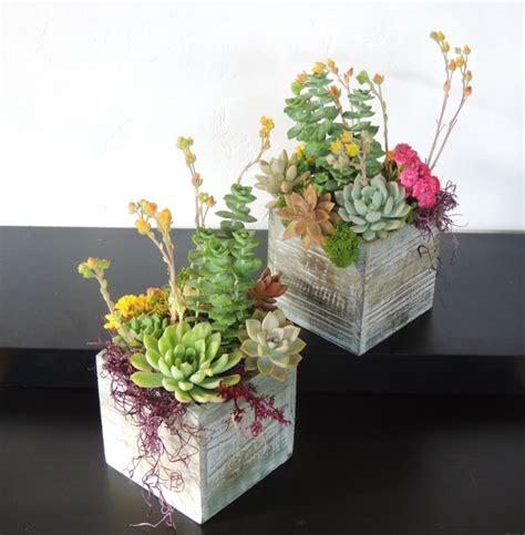 succulent arrangements succulent arrangements