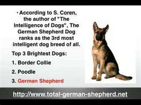 german shepherd puppy facts german shepherd facts gsd facts