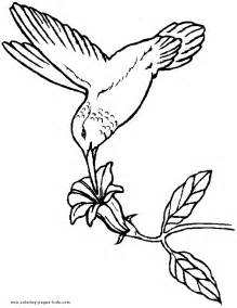 wood burning templates free birds coloring book page hummingbird coloring page for