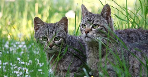 home remedies to keep cats away ehow uk