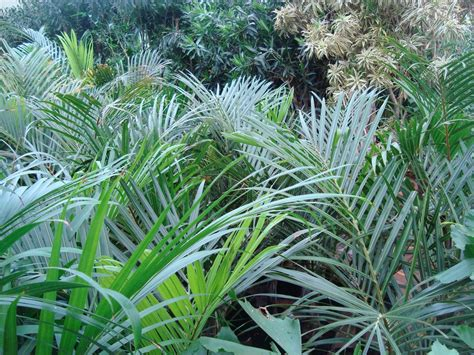 outside plants outdoor plants flora aruba s home and garden decoration