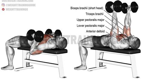shoulder joint pain bench press 25 best ideas about bench press on pinterest bench