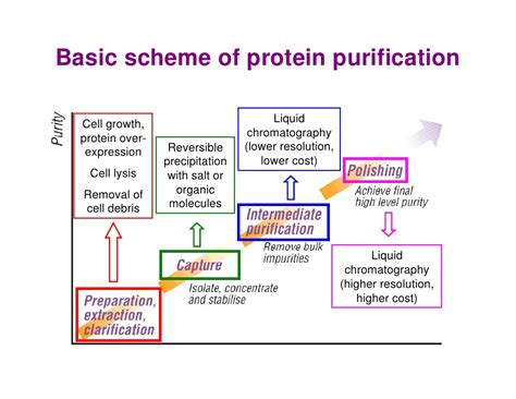 j protein expression purification protein purification hjp