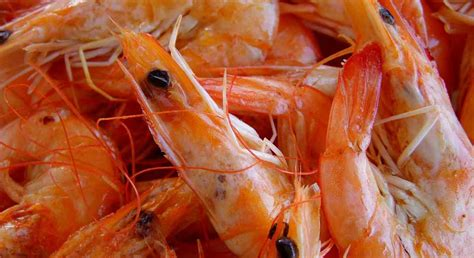 shrimp for dogs can dogs eat shrimp or is it bad for them