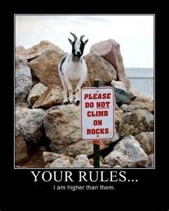 My Kitchen Rules Knives funny goat stuff for cass pinterest