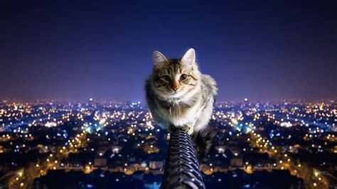 imagenes para fondo de pantalla gatos un gato en la altura hd 1366x768 imagenes wallpapers