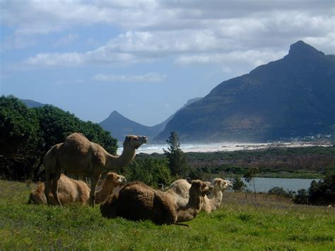 imhoff homestead imhoff homestead product review brooklinen imhoff farm what s on in cape town