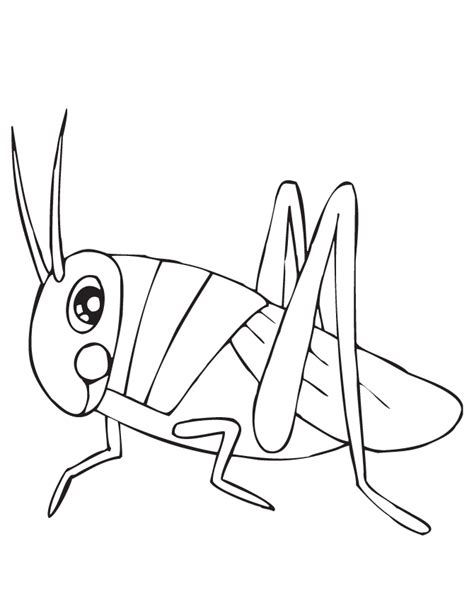 cute grasshopper coloring page h m coloring pages