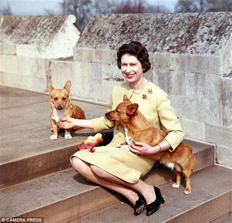 queen corgis my pedigree chum for the first time a royal corgi