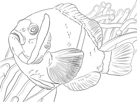 realistic coral coloring sheets coloring pages