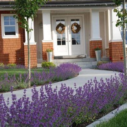 lavender border garden pinterest lavender