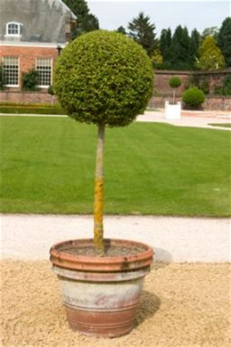 how to make topiaries how to make a topiary