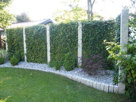 Garten Sichtschutz Pflanzen 574 by Details Zu 1x Mobilane Fertighecke 174 Efeuhecke