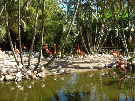 file flamingo gardens jpg