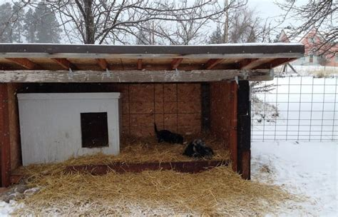 dog house winter diy cold weather dog house what to know