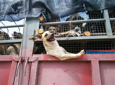 vanderpump dogs vanderpump s foundation committed to ending the