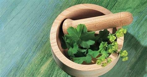 tanaman herbal  bagus  kesehatan
