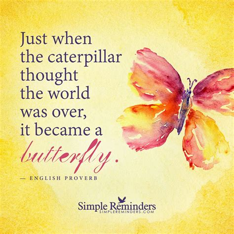 Just When You Thought New On The Block Were by Become A Butterfly Just When The Caterpillar Thought The