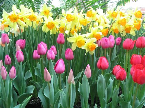 spring gardening the management group property and hoa management it s