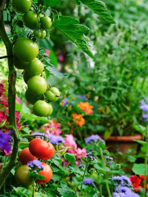 Making Fruit And Vegetable Garden In The Backyard Fruit And Vegetable Garden