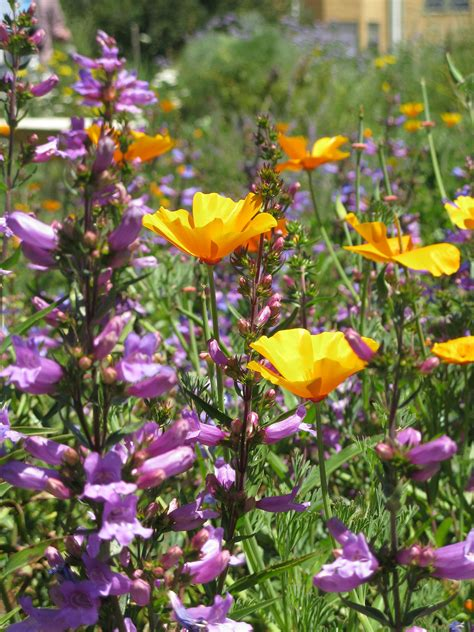california bee garden 171 bringing back the natives