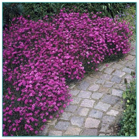 All Season Flower Garden Flower Garden Borders Pictures